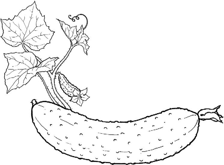 Раскраски фрукты и овощи